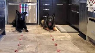 Dogs take part in speed eating challenge