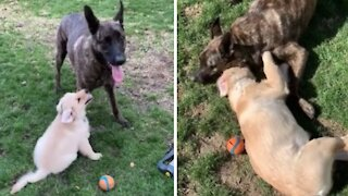 Adorable compilation of dog & puppy best friends