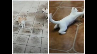 Dog And Cat funny Fighting