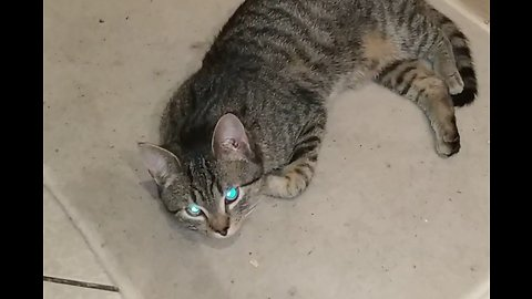 Cat with Creepy Glowing Eyes