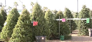 Max Pawn Shop giving free trees to first responders