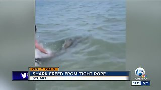 Shark freed from tight rope