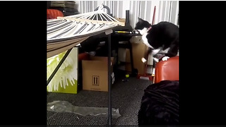 Cat jumping onto hammock leads to epic fail