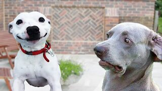 !!TRY NO TO LAUGH CHALLENGE!! Funniest pets on the internet