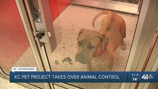KC Pet Project takes over animal control