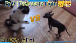 Episode 9 | Preludes to fight 😼🐶