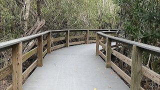 Peaceful Walk on Nature Paths at Lighthouse Beach Park