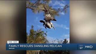 Family rescued dangling pelican