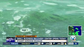 Small businesses impacted by algae can apply for federal loans starting Friday