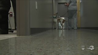 Doggie donors needed to help with nationwide blood shortage