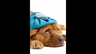 What to do when your dog lost appetite