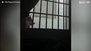Un chien parvient à s'immiscer dans leur maison