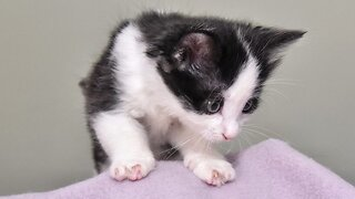 Is It Pawssible? Kittens With Rare Paws Abandoned In A Car