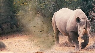 How to Survive a Rhino Attack