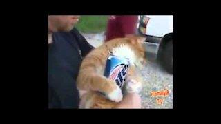 Animales borrachos videos graciosos !! (Gatos)