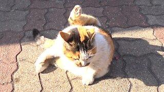 Straycat's yoga grooming