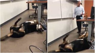 Un invité surprise en classe: le chien du prof
