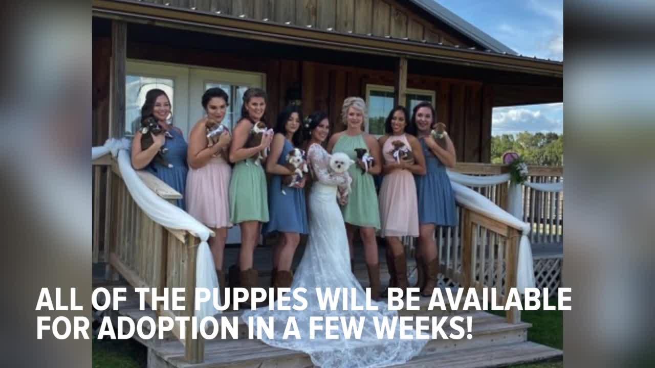 Wedding puppies! Florida couple raises awareness about adoption