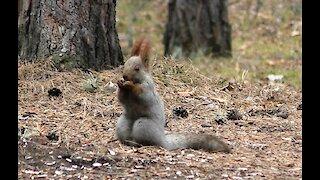 Squirrel has Breakfast