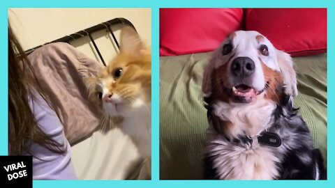 Cute Cats & Dogs Compilation