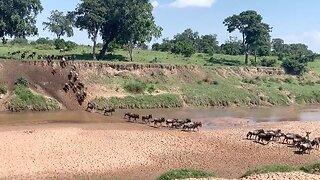 Wildlife Photographer Films Stunning Wildebeest Migration Filter Across River