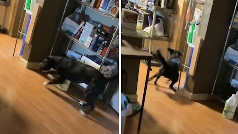 Pup makes an epic mad dash to go to the bathroom