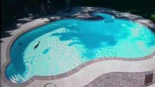 Cervo nuota in piscina negli USA