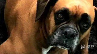 Toxic algae claims life of dog, pet owner says