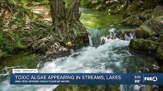 Toxic algae appearing in streams and lakes