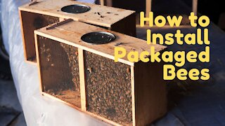 How to Install Packaged Bees