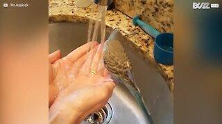 Cette perruche se douche dans l'évier