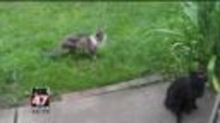 Jackson woman overrun by stray cats, says neighbor is an enabler