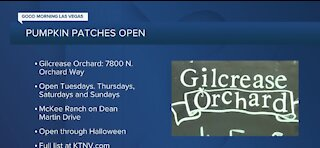 Pumpkin patches open across the valley