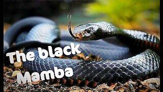 The black mamba change skin