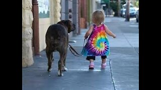 Babies walking with dogs