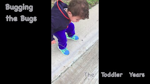 Bugging the Bugs (how to entertain a toddler)