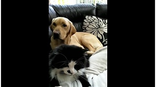 Jealous Dog Is Upset That Cat Is Getting All The Attention From Their Owner