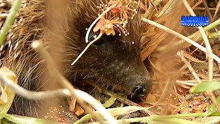 Ежики или новая семья «домовых». Hedgehogs or a new family of urchin.