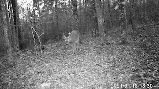 Young Buck Comes Close