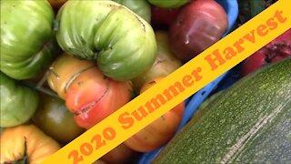 2020 Summer Garden Harvest