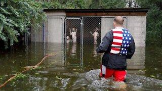 Héroes rescatan a 6 perros que dejaron encerrados en una jaula tras el paso de un huracán