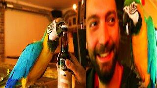 Amazing Parrot Jack can open beer bottles with his beak - Monkey Animals 079