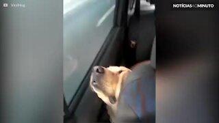 Cão dorme no carro da forma mais desconfortável
