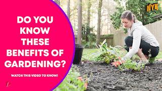 Top 3 Health Benefits Of Gardening