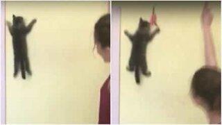 Spider-Cat: Se denne super-kattungen klatre oppetter en vegg for å fange et leketøy!