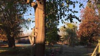 Har du noen gang sett frosne blader som faller fra et tre?