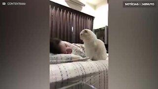 Gato dá tapinhas em rosto de dona para tentar acordá-la