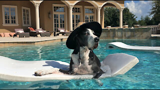 Great Dane makes the most of summer by lounging on a pool float