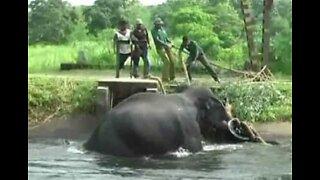 Elefant reddet fra kanal i Sri Lanka