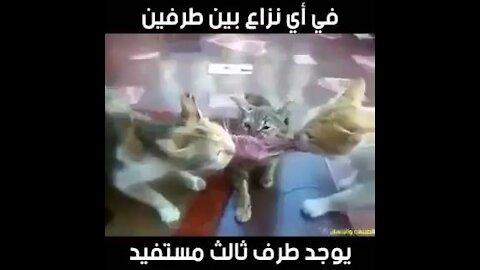 The three cats